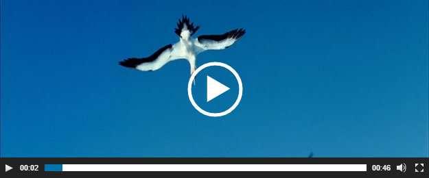 Easy Video Player Plugin WordPress